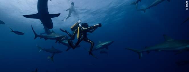 Szene aus Dem Film Jacques - Entdecker Der Ozeane
