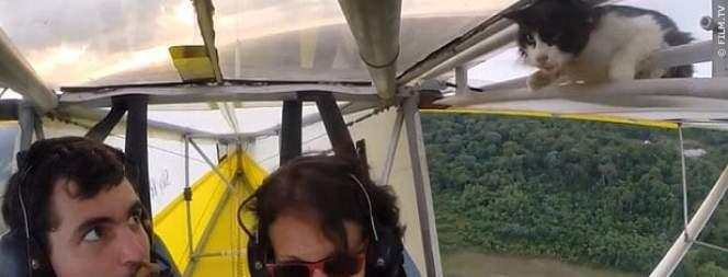 Katze fliegt auf Flugzeug mit