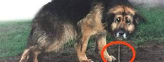 Video: Hund nach 10 Jahren an der Kette befreit