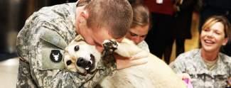 Unglaublich schön: Hunde sehen ihre Besitzer wieder
