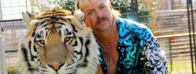 Grosskatzen: Was ist mit den Tigern passiert?