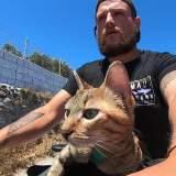 Katze fährt Quad im Geschwindigkeitsrausch