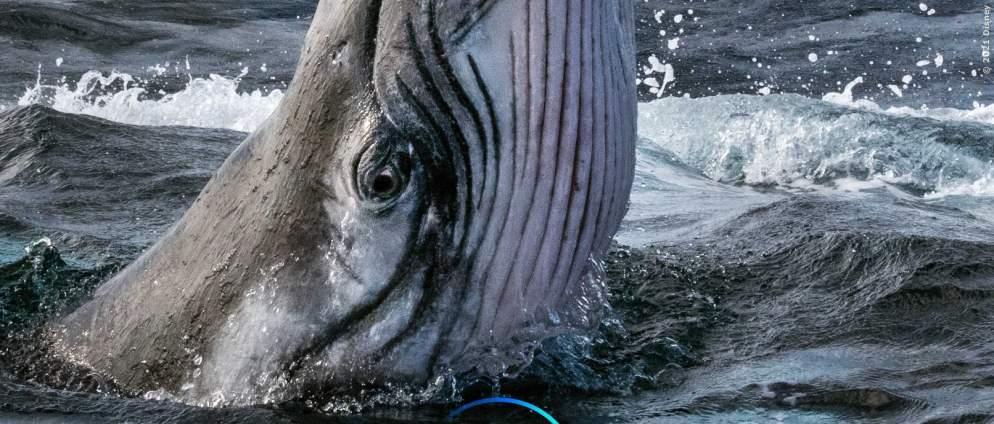 Die geheimnisvolle Welt der Wale