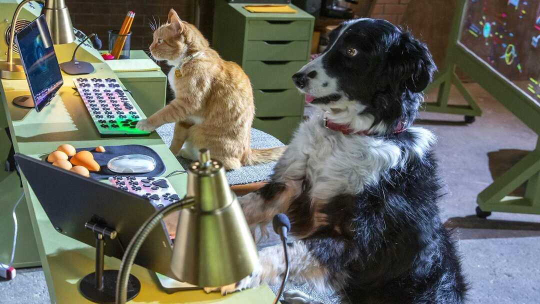 Cats & Dogs 3: Pfoten Vereint! Trailer - Bild 1 von 3