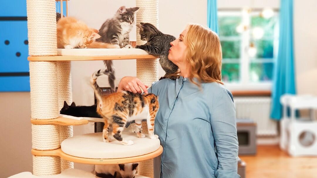 VOX startet die Katzen-Kita - Bild 1 von 5